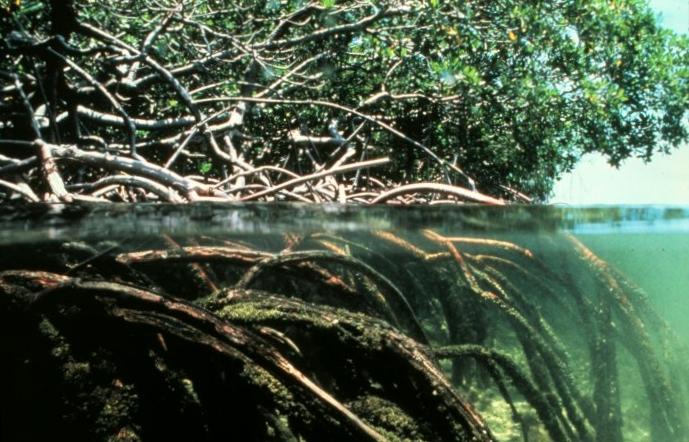 LAB 2017: La apreciación de los manglares de Juan Díaz – un ecosistema polivalente